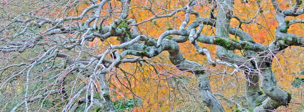 TREE GALLERY