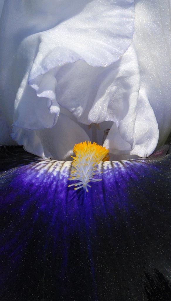 FLOWER GALLERY
